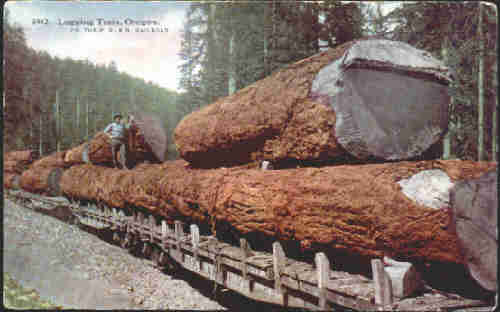 a log train in the woods